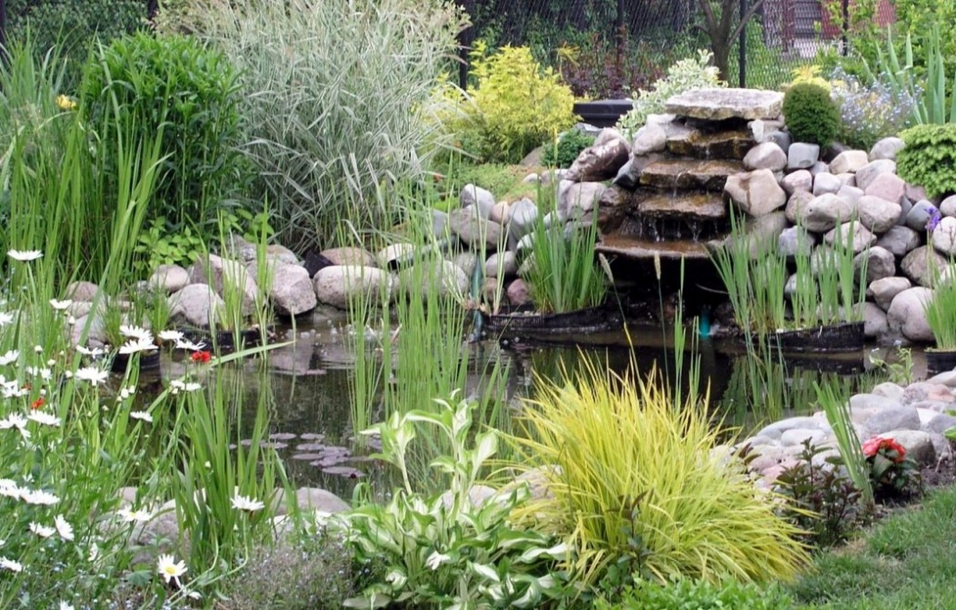 Petits Bassins De Jardin Comment Les Installer Pratiquefr