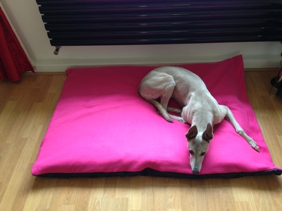 xl waterproof dog cushion bed