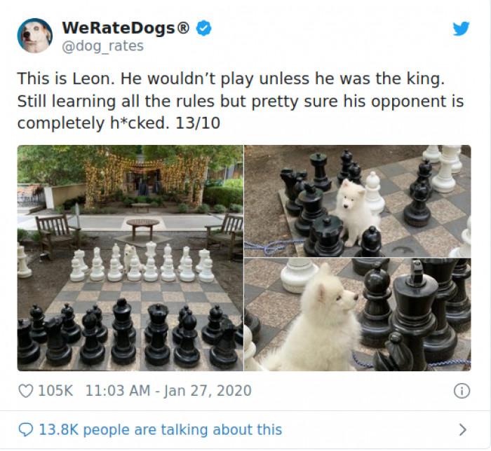 25 Best Memes About Doggo Doggo Memes