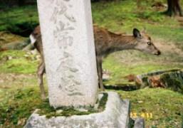 Nara, Japan. Photo Chikashi Suzuki
