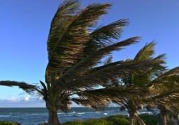 Palm Trees behind The Delano Hotel, Miami Beach. Photo Gavin Doyle