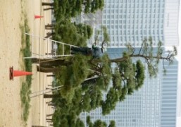 Work in the gardens of the Tokyo Imperial Palace, Tokyo.