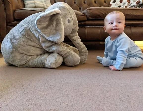 giant elephant cuddler