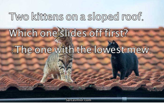 Cat Jokes Read Up On Our Funny Cat Jokes Reader S Digest
