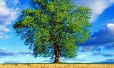 Sebatang Pohon (ilustrasi)