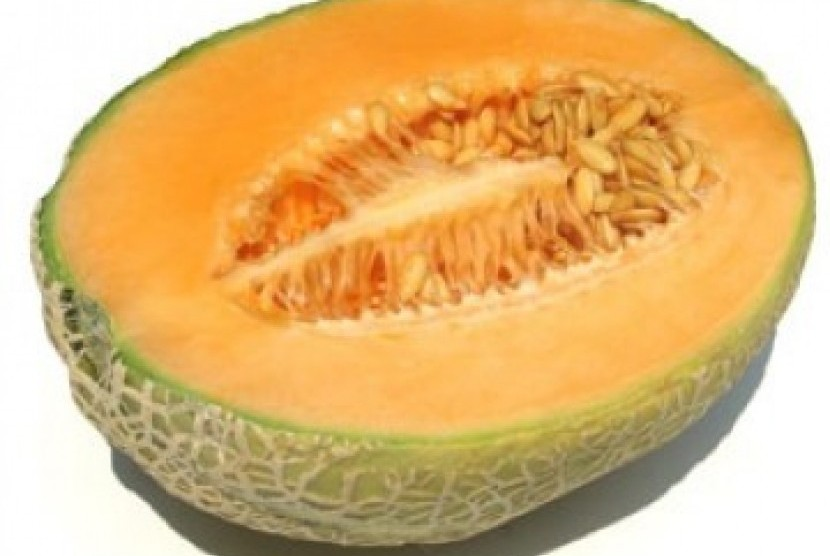 Buah Melon, ilustrasi