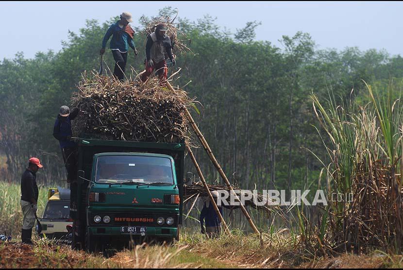 Petani memanen tebu untuk kemudian disetor ke pabrik gula (ilustrasi)