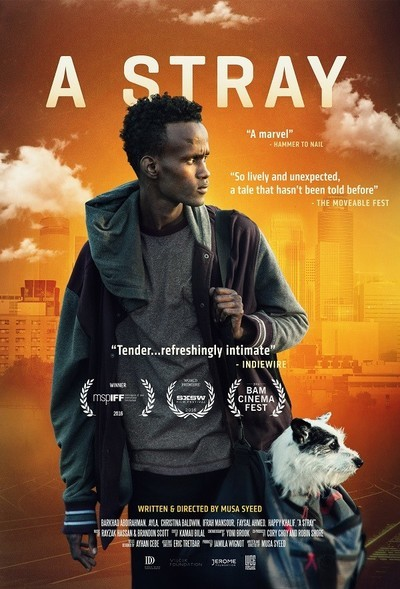 A Stray Movie Review Amp Film Summary 2016 Roger Ebert