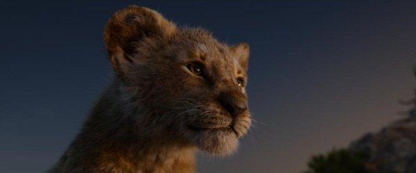 lion king online subtitrat # 13