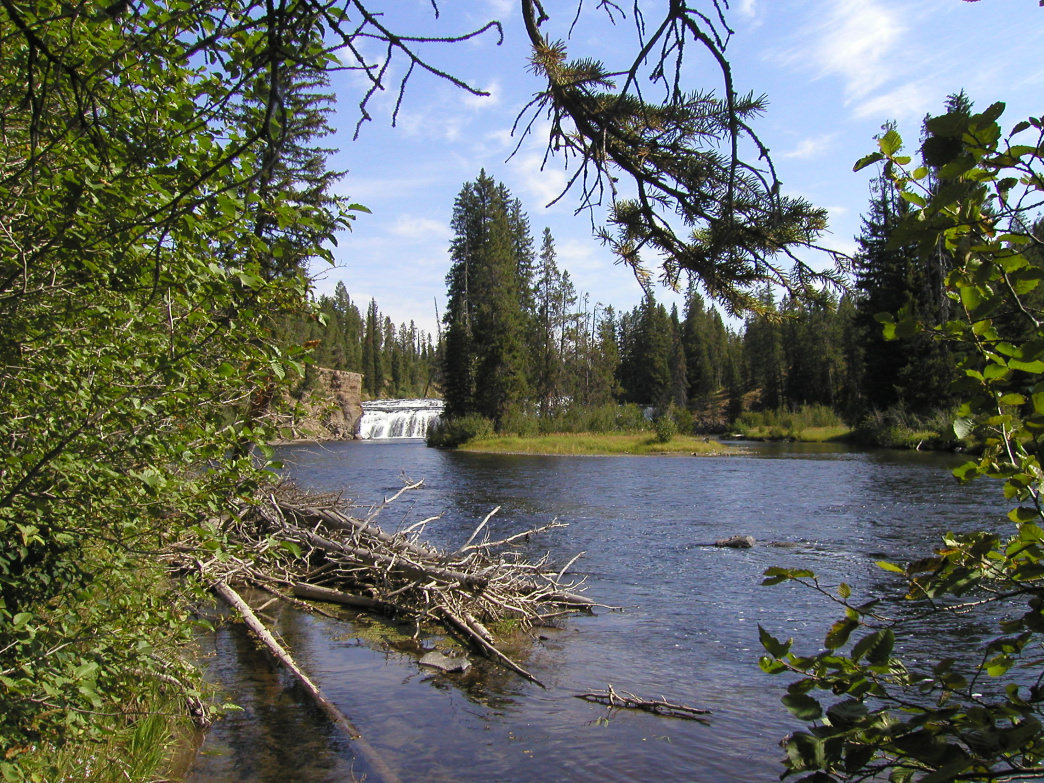 Yellowstone's Bechler River.