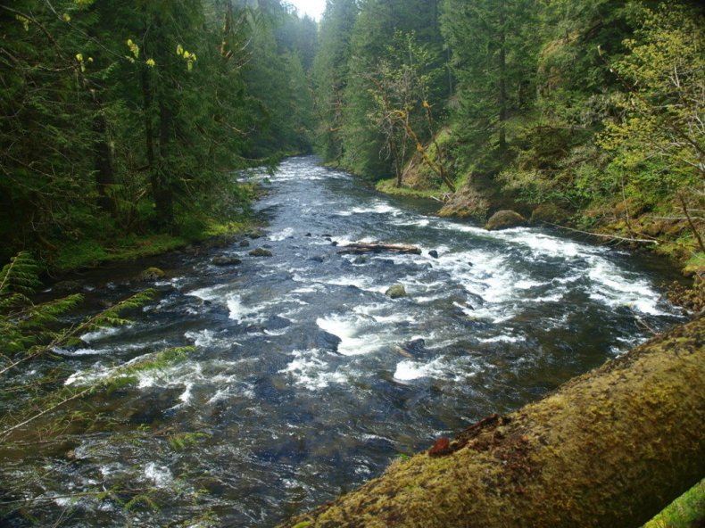With easy access and a beautiful riverside trail through lush old-growth forests, it's no wonder the Salmon River Trail is a popular option for Portlanders.