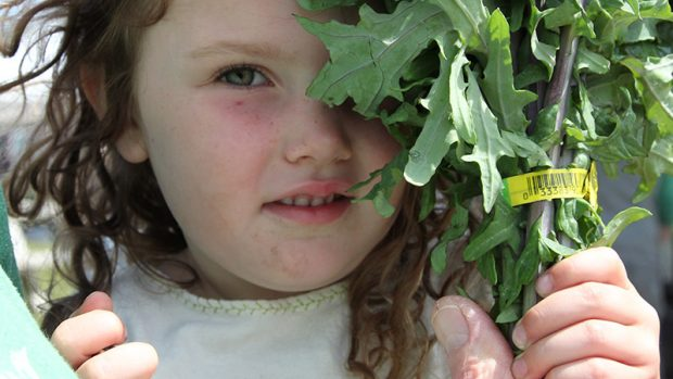 A little brown-haired girl peeks from behind a bunch of arugula.