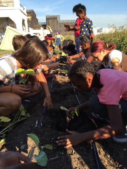 Schoolchildren plant seedlings in a rooftop garden.