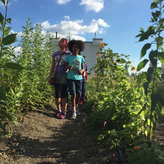 Girls walk through a field of sunflowers on a NYC rooftop garden.