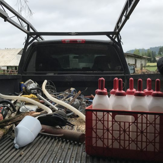 Bottles of milk for the calves in the back of a truck.