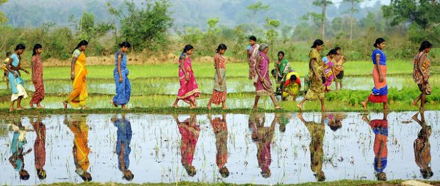 A line of Indian women wearing colorful saris walk across a ridge in a rice paddy.