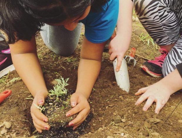 Children plant seedlings in the garden at Zenger Farm during their farm school program.