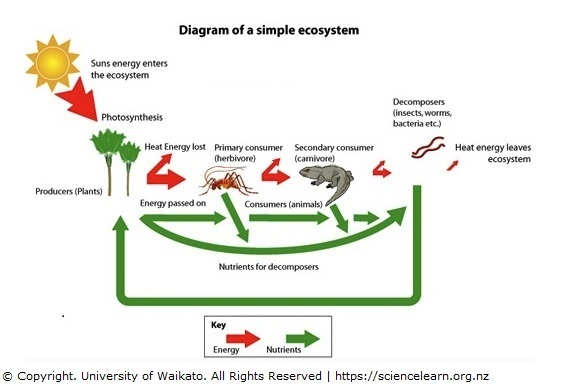 Simple ecosystem diagram — Science Learning Hub