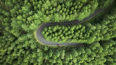 Massive Forest Restoration Could Greatly Slow Global Warming