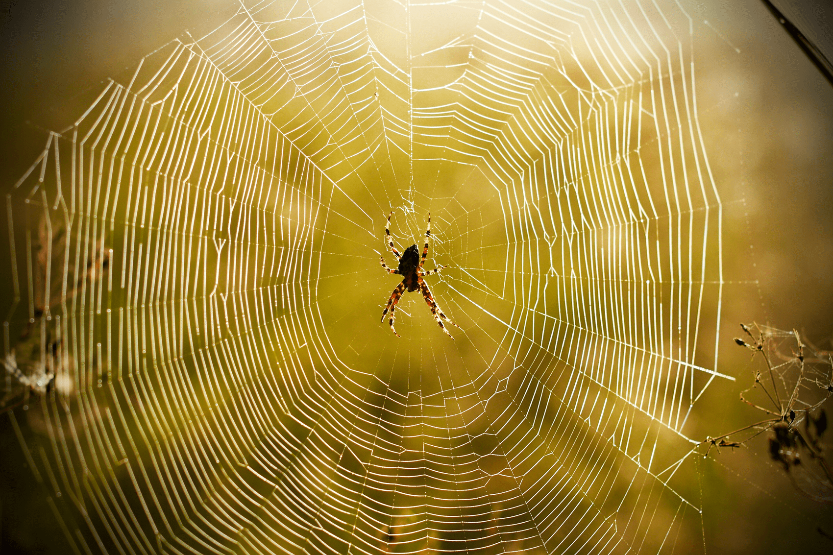 Sticky Science The Evolution Of Spider Webs Scientific American
