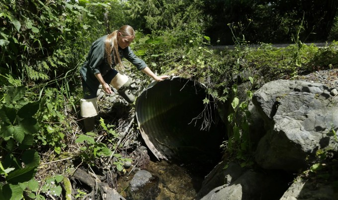 Melissa Erkel, a fish-passage biologist with the Washington Dept. of Fish and Wildlife, looks at a culvert along the north fork of Newaukum Creek near Enumclaw, Wash., on June 22, 2015. (Ted S. Warren / AP)