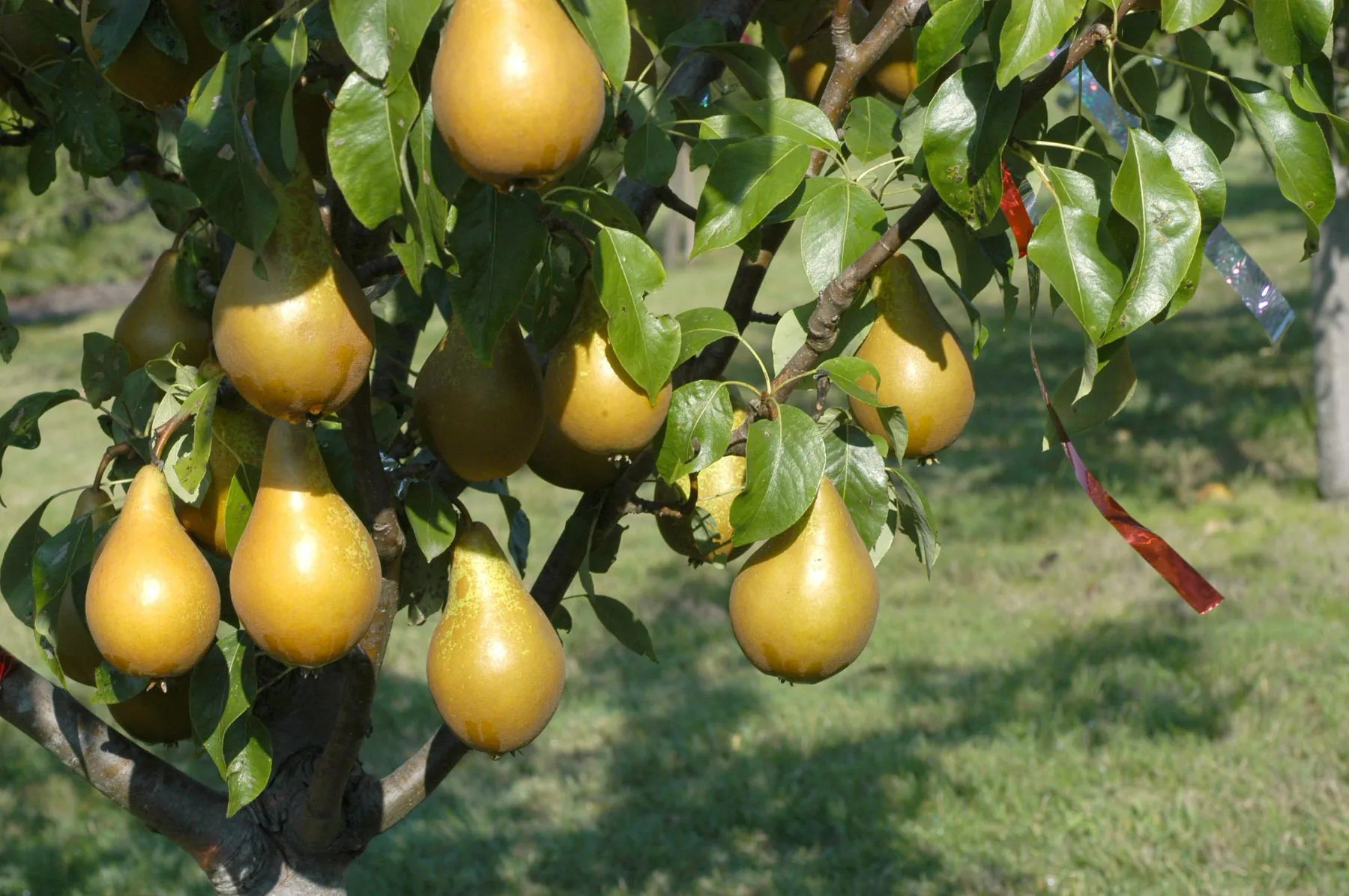 It S Time To Plant Fruit Trees Here S How To Best