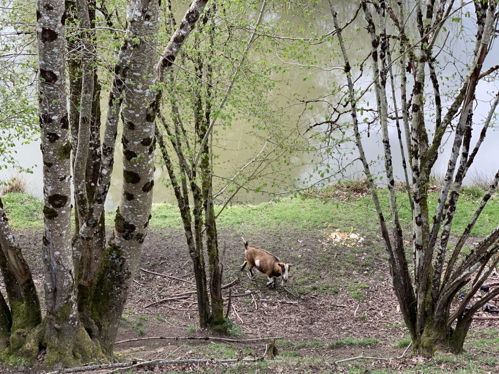 Ghosts Grottos And Cro Magnon Man In Limousin