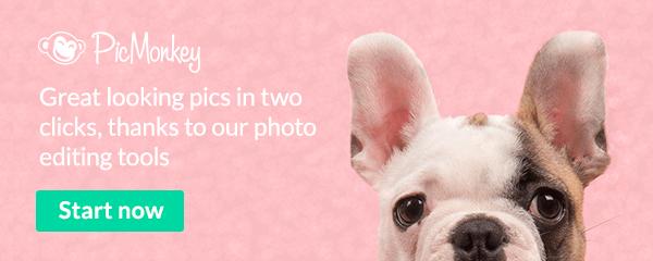 Dog on pink background