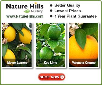 Shop for Citrus Trees at NatureHills.com