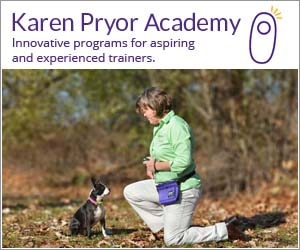 Innovative programs for aspiring and experienced trainers.