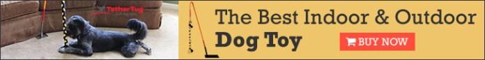 The Best Indoor & Outdoor Dog Toy