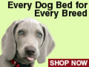 Every Dog Bed for Every Breed