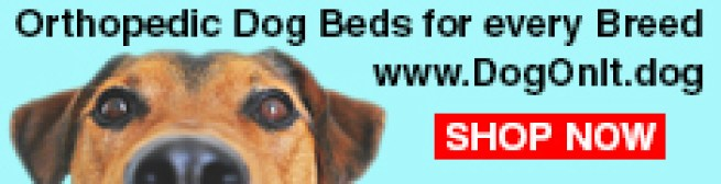 Orthopedics Dog Beds for Every Breed