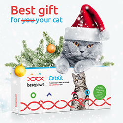 Basepaws Cat DNA Test - Best HOLIDAY Gift!