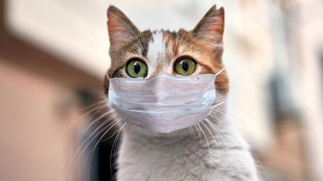 corona virusu kedilere bulasiyor 00 - Sokak kısıtlaması ve kafalardaki soruların cevapları