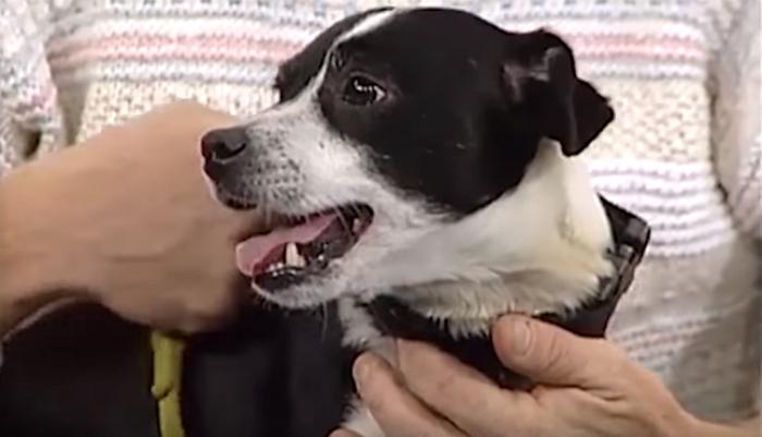 車にひかれて死んだ愛犬が埋葬後に生き返る