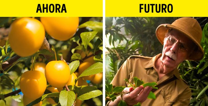 10 Alimentos que posiblemente nunca volvamos a comer debido al cambio climático