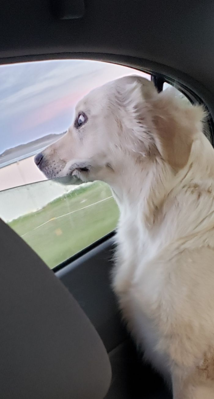 Feeling The Wind In Your Floof