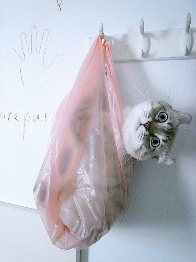 Cat hanging in a plastic bag
