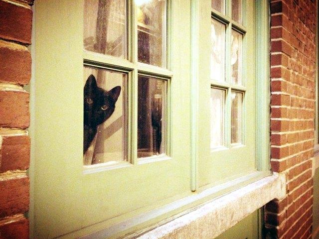 Cat looking through dirty window.