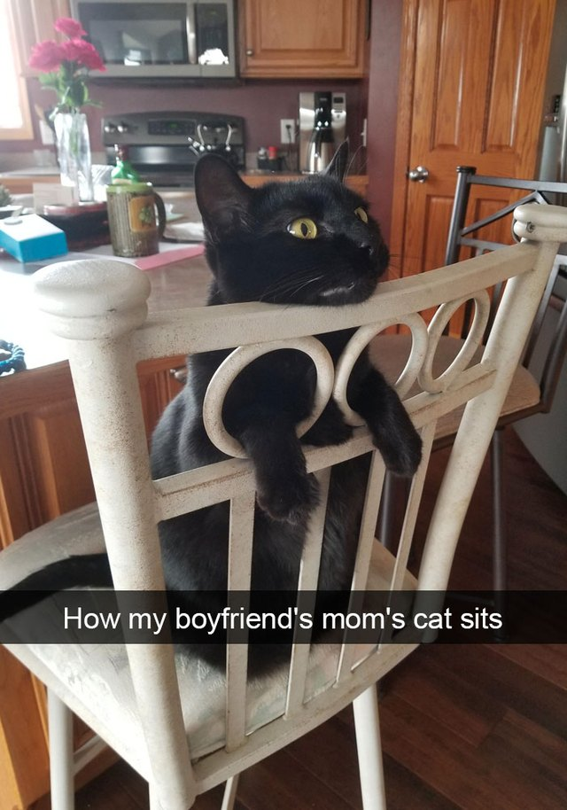 Cat sitting in a chair backwards so his arms poke out of the chair