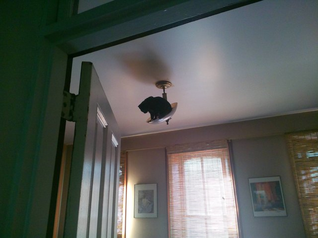 Cat climbed to the light fixture and now he