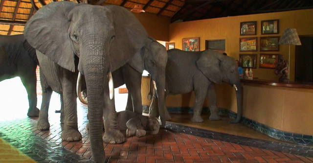 Image result for elephants in the room
