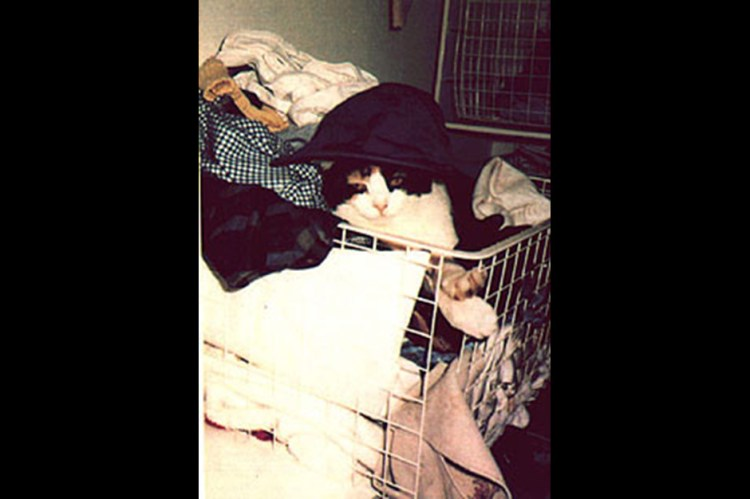 Freddie Mercury's cat, Delilah