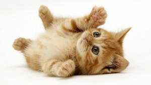 Scratchy cat.jpg