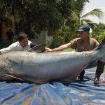 huge_fish