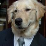 dogsuit