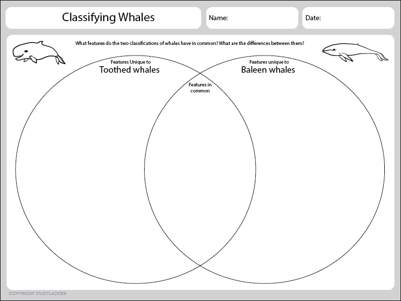 Classification Features Venn Diagram