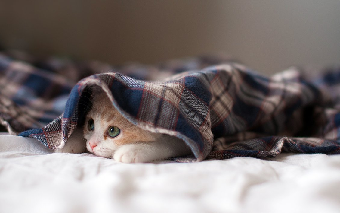 Image result for cute cats hiding under blanket