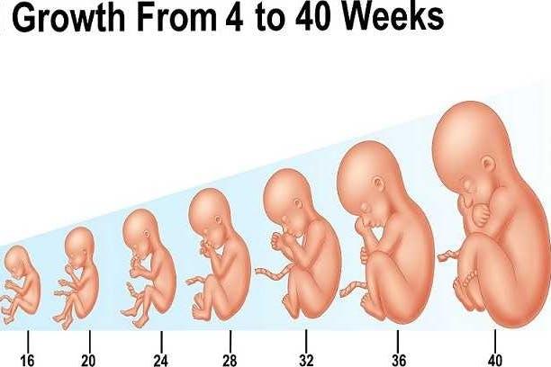 الشهر السادس طب تايم